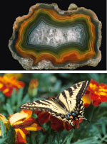 Mineral and animal world